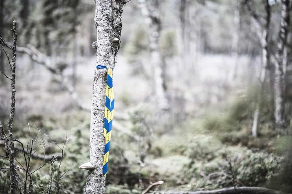 Skogscertifiering för ett hållbart skogsbruk