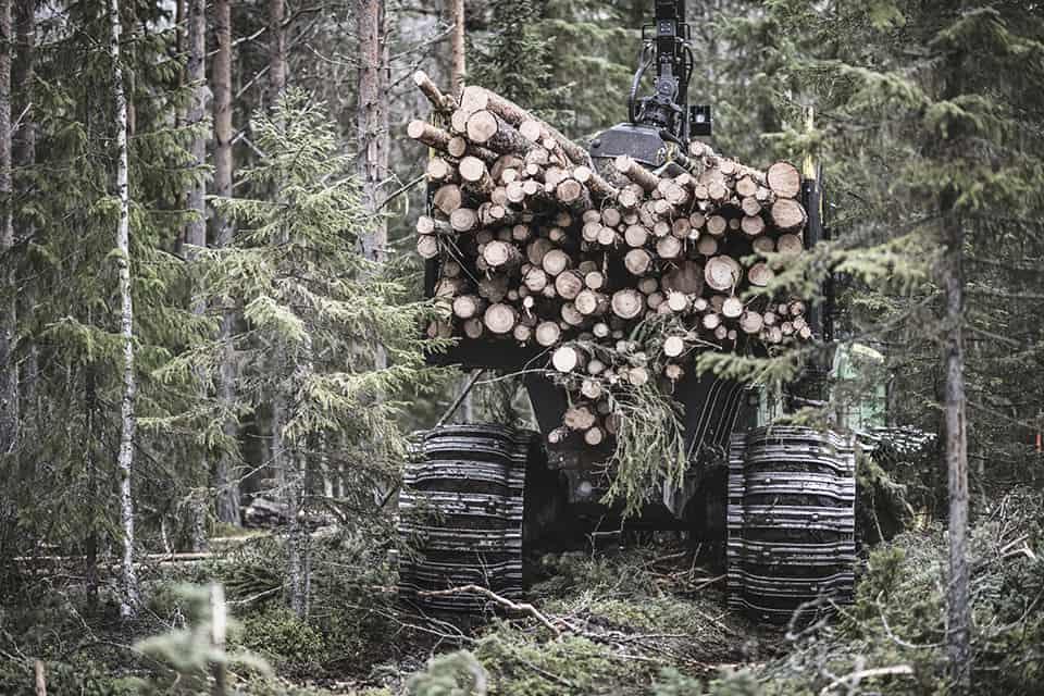 Värdefull skog för naturen samhället och företagen